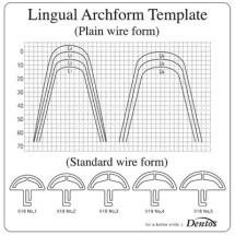 lingual_5